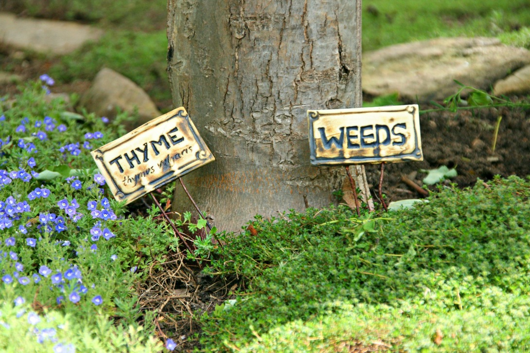 thyme and weeds