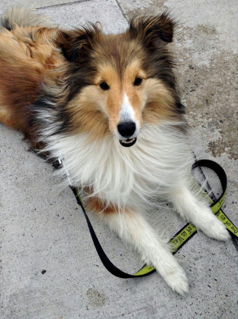 doggie 3