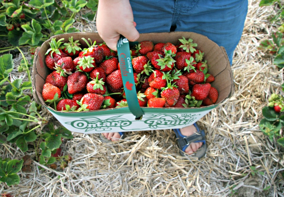 strawberry picking james