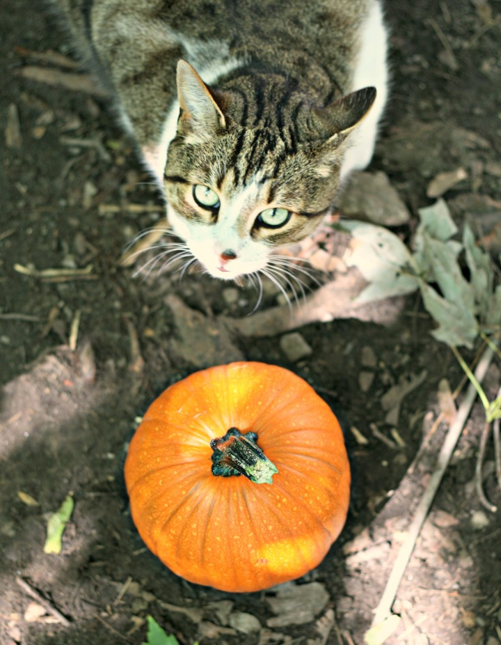 Benny and pumpkin