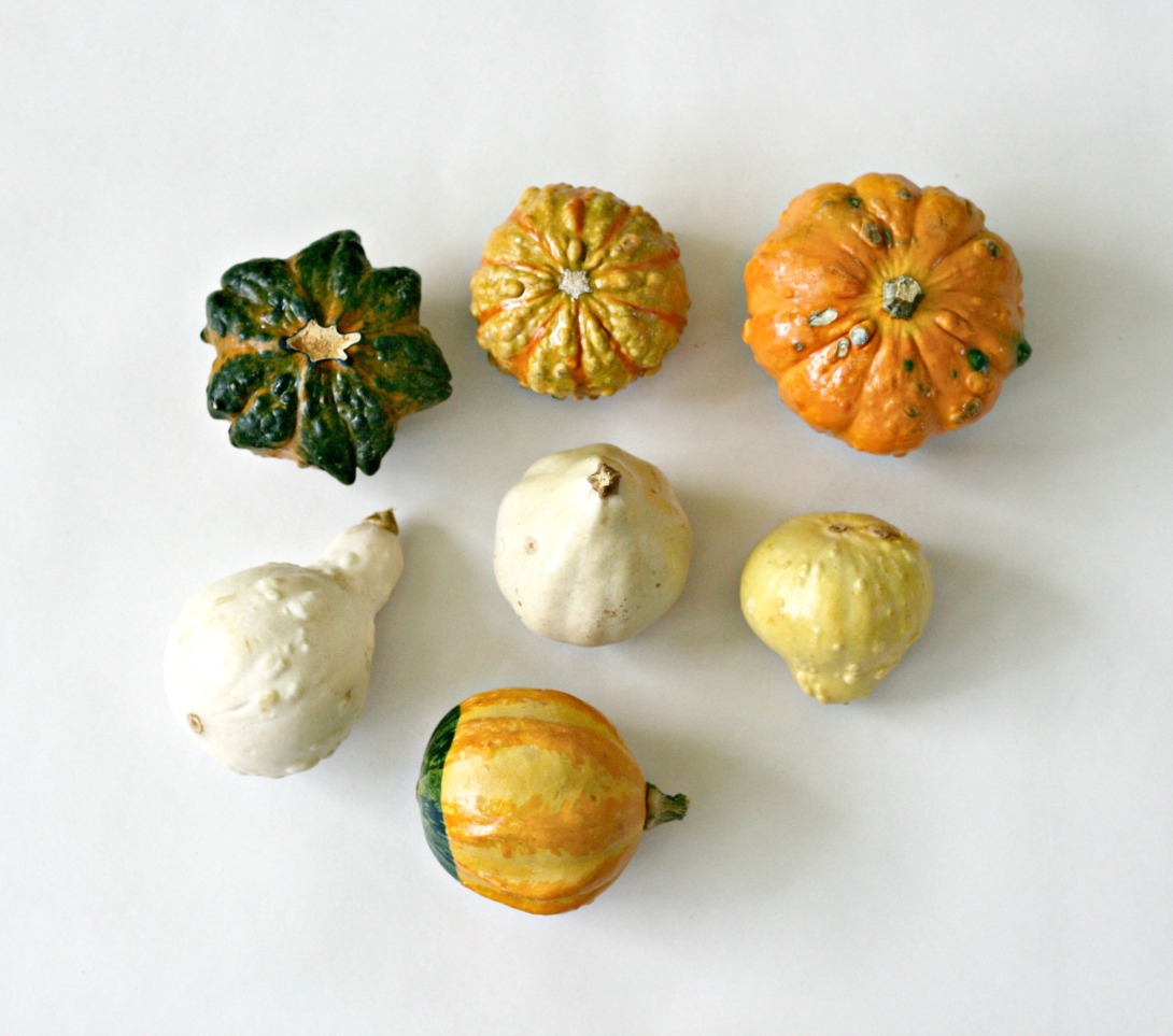 gourds square