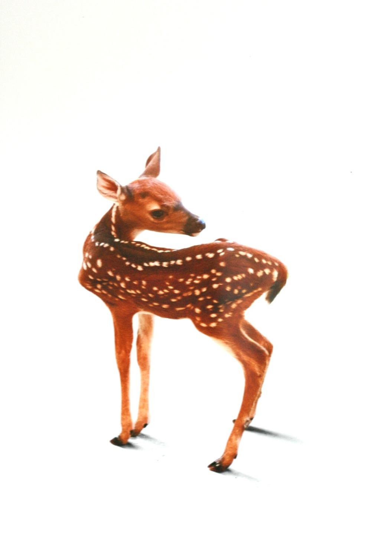 gw a deer friend