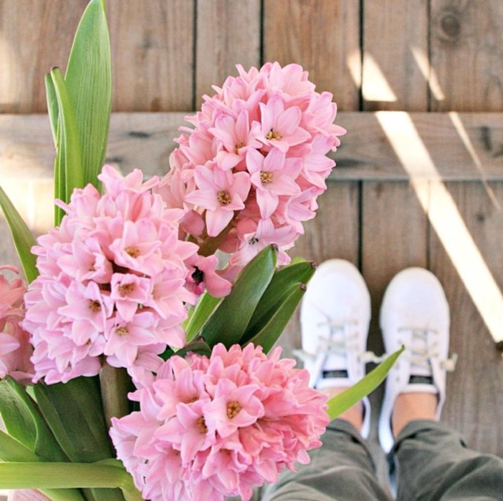 hyacinth FB