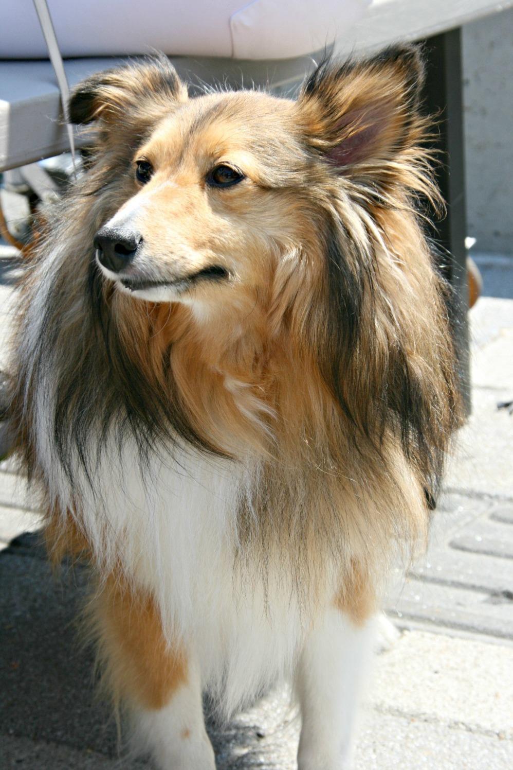 fm jord 9 cute doggie