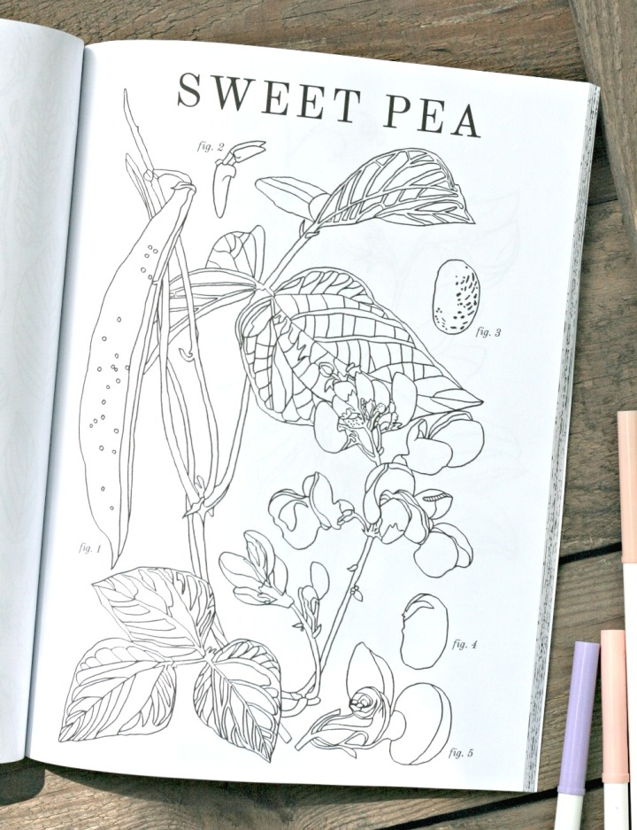 Flowers Coloring Book By Brittany Jepsen Sweet Pea