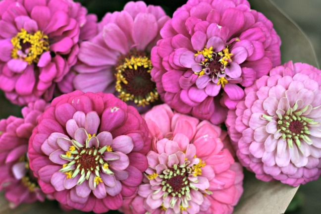Bounce energy balls flowers