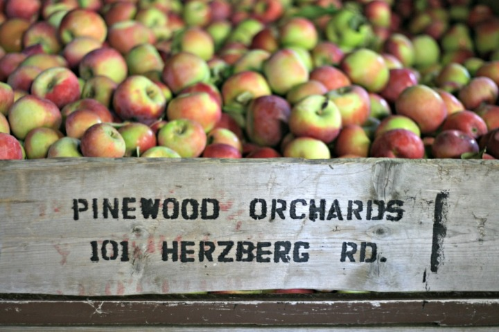 apple-picking-pinewood-orchards