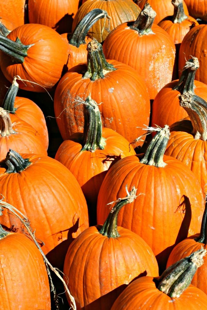 apple-picking-pumpkins