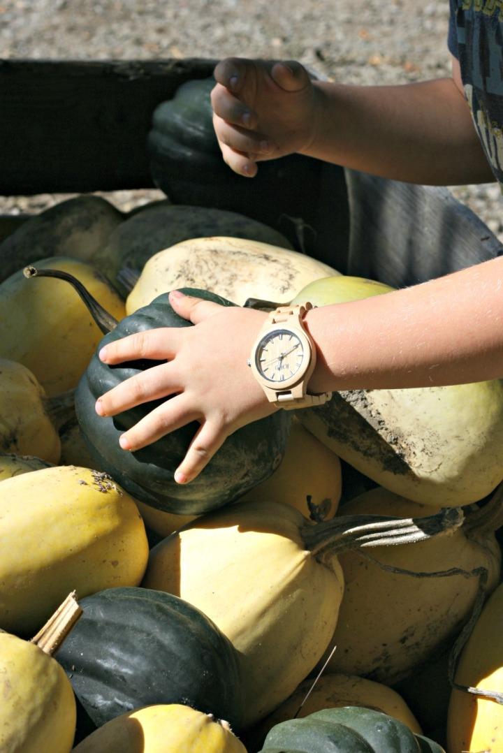 apple-picking-squash-jord-wood-watch-fieldcrest-maple