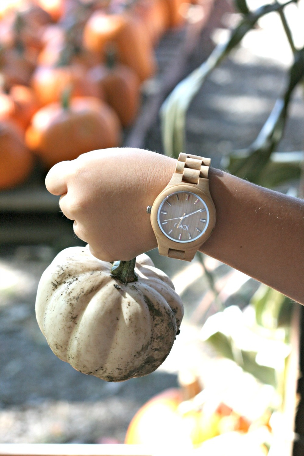 apple-picking-white-pumpkin-jord-wood-watch-fieldcrest-maple