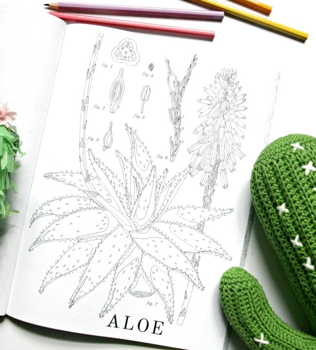 cactus-colouring-book-aloe-4