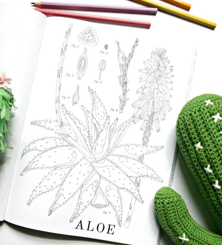 cactus-colouring-book-aloe-4