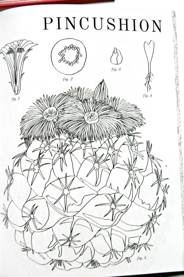 cactus-colouring-book-pincushion