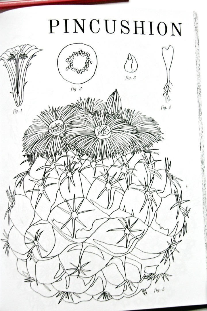 Cactus Coloring Book by Brittany Jepsen + Win a copy