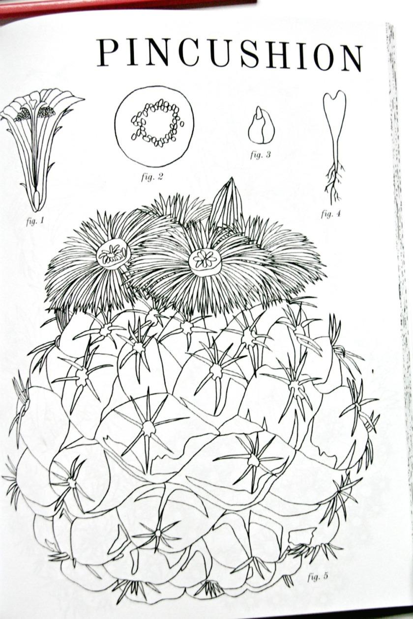 cactus-colouring-book-pincushion
