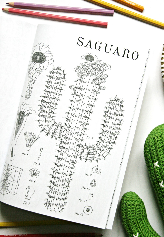 cactus-colouring-book-saguaro-2
