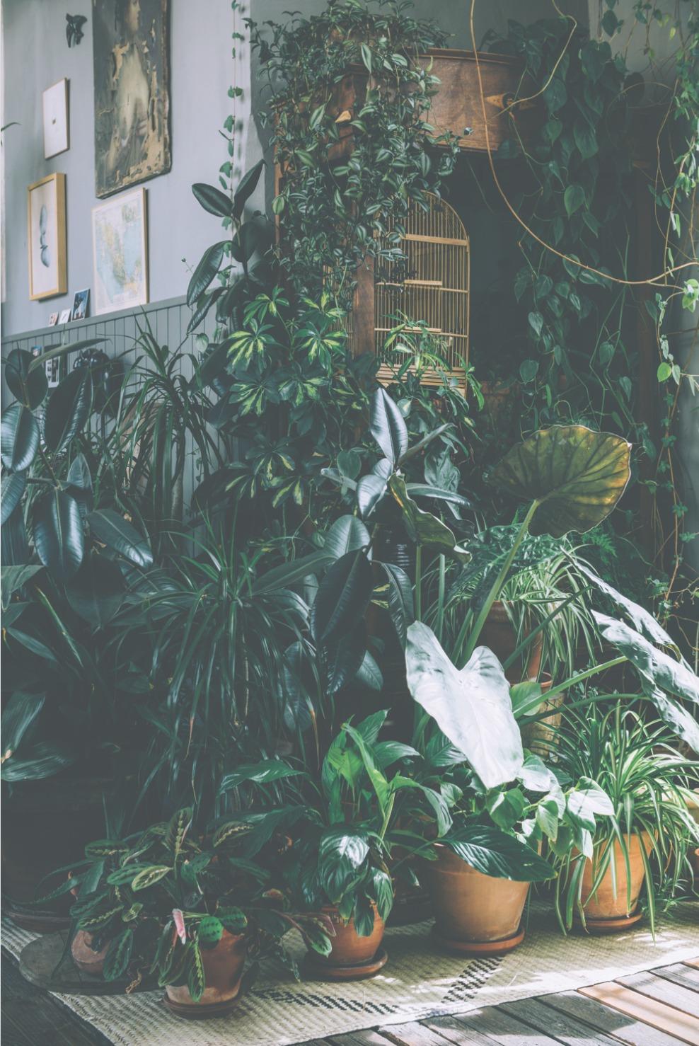 wonder-plants-oficio-studio