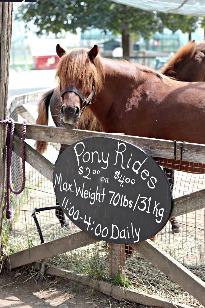 Chudleighs pony rides