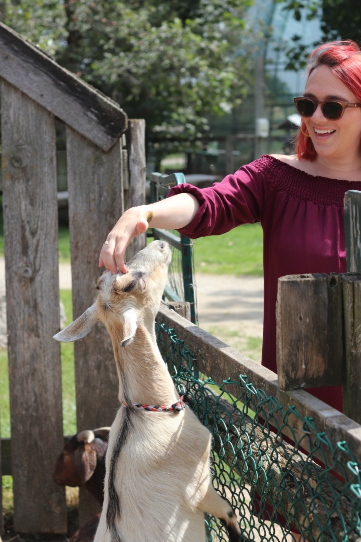 Chudleighs so cute petting zoo