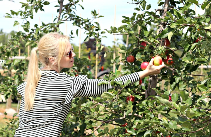 How do you like them apples? Celebrating 50 years with Chudleigh's Farm 🍎 #Chudleighs