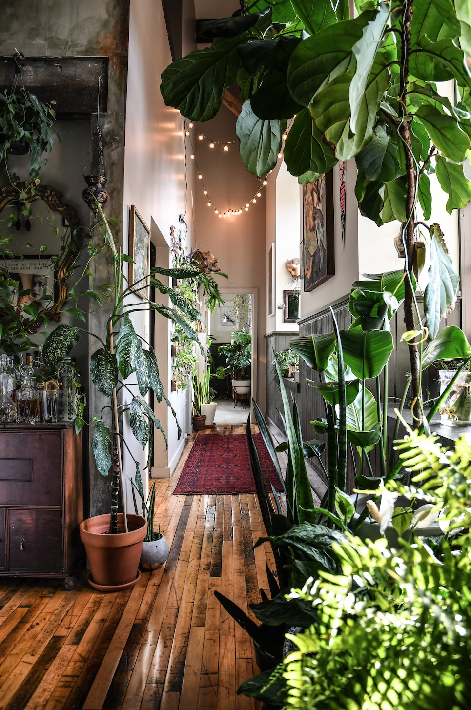 Wonder Plants 2 copyright Hilton Carter 1