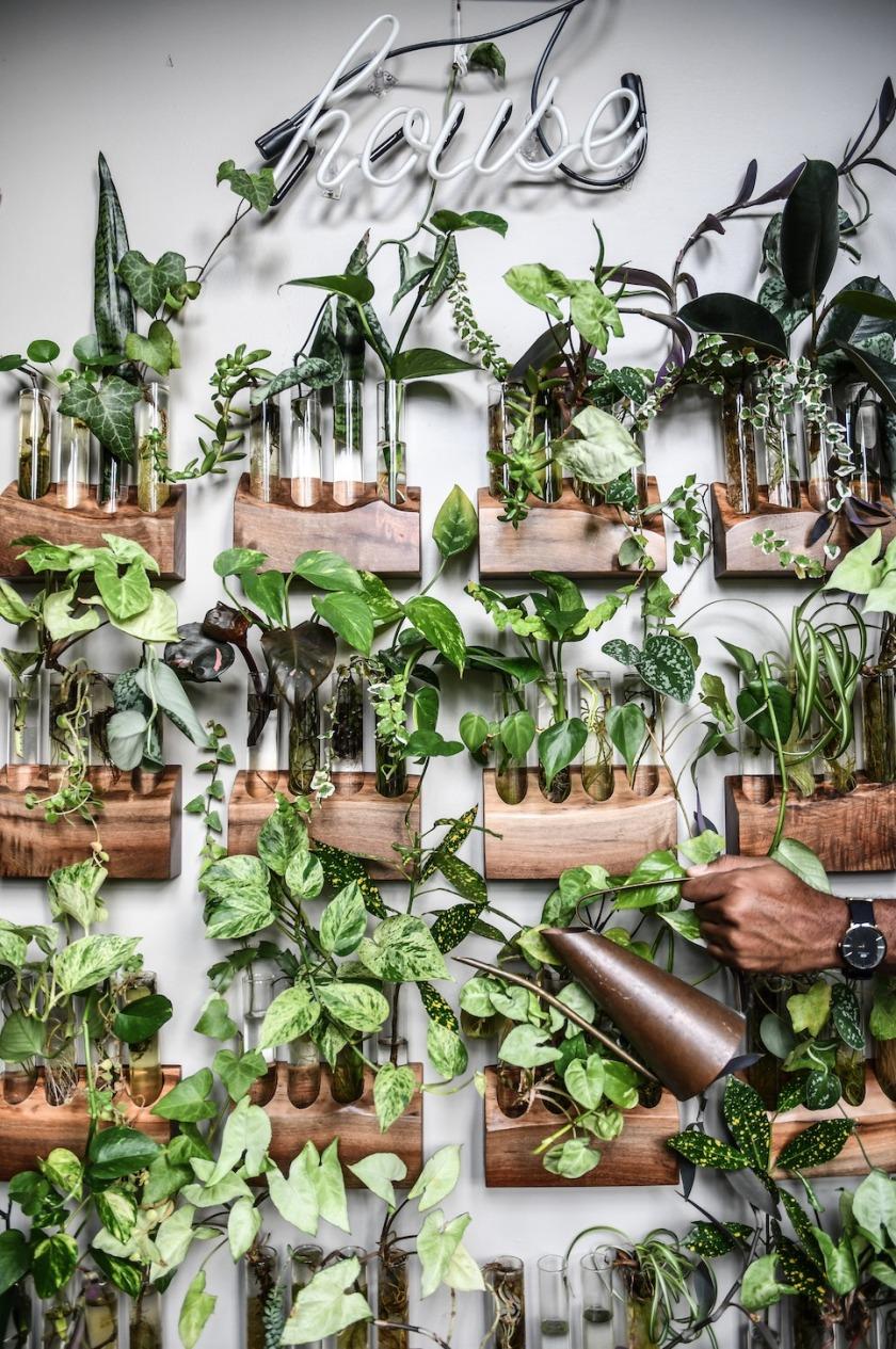 Wonder Plants 2 copyright Hilton Carter 4